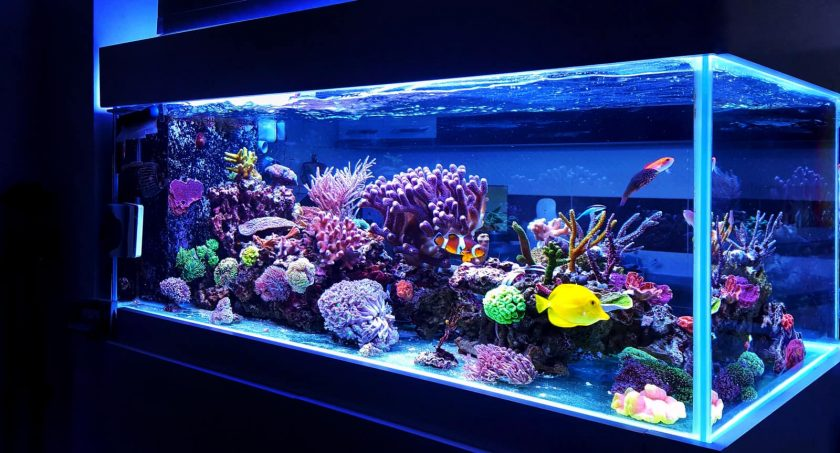 Large glowing aquarium with colorful fish and corals
