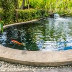 Everything You Need to Know About Building and Maintaining a Koi Pond