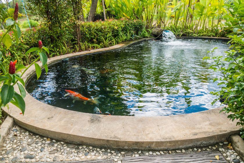 Beautiful and clean Koi pond, surrounded by rich vegetation