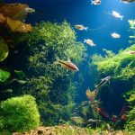 How to Care for Aquarium Plants