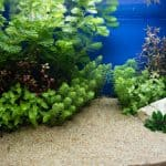Using Aquarium Plants To Create a Living Artwork