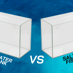 The Battle Between Saltwater vs. Freshwater Fish Tanks is Over
