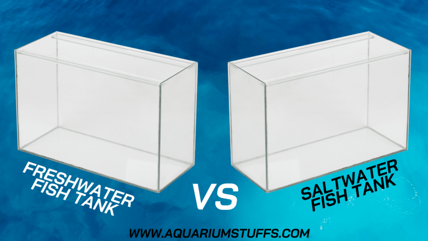 The Battle Between Saltwater vs. Freshwater Fish Tanks is Over e1597429425314
