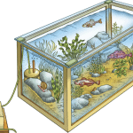 An Aquarium Chiller Can Save Your Fish Tank in a Heatwave