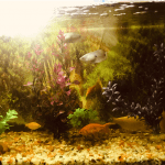 How to Solve the Cloudy Fish Tank Problem