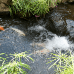 Prevent the Winter Overkill with The Best Fish Pond De icer
