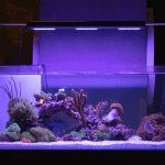 Best Aquarium Lights for a Balanced Fish Tank