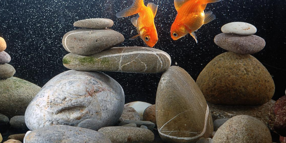How to Choose the Right Aquarium Rocks and Substrate for Saltwater and Freshwater Tanks